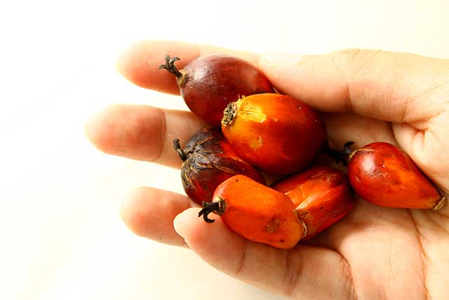 A Hand Holding Various Red Palm Fruits.