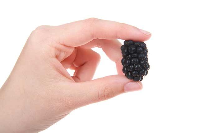 A Hand Holding a Fresh Black Boysenberry.