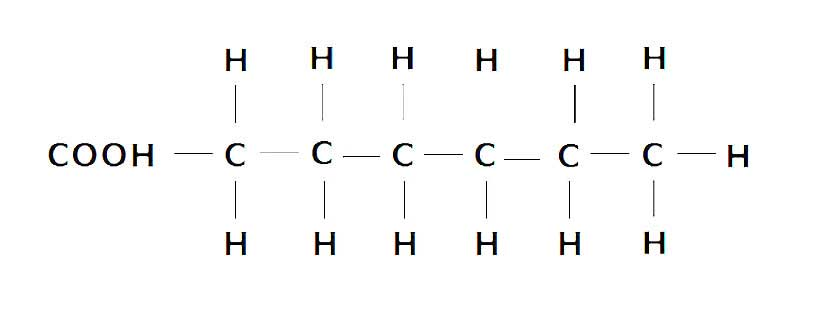 Chemical Structure of a Saturated Fatty Acid.