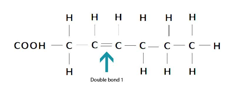 The Structure of Monounsaturated Fatty Acids Showing Double Bond.