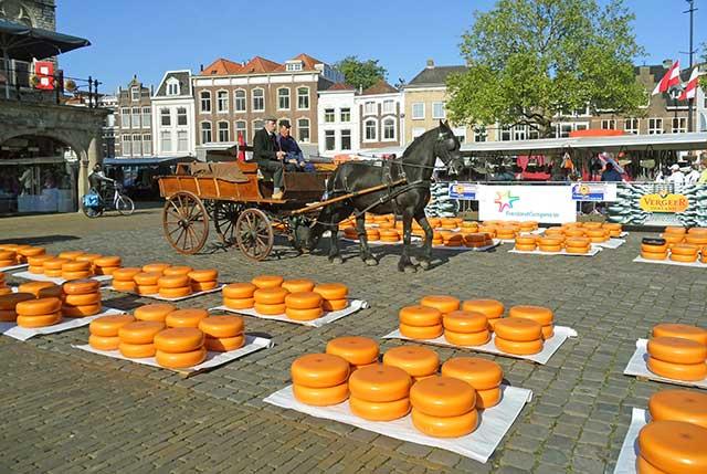 Gouda Cheese Wheels at Gouda Traditional Cheese Market.