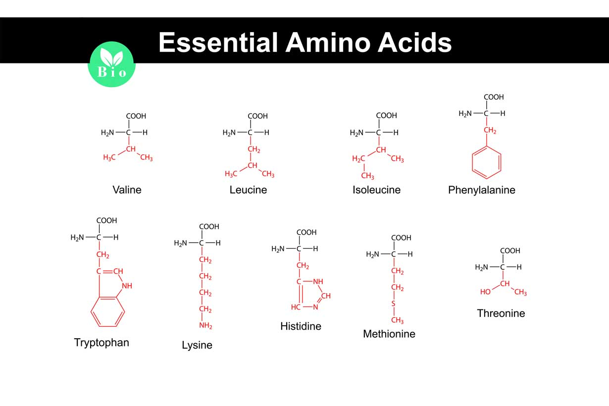 Essential Amino Acids  Functions  Requirements  Food Sources
