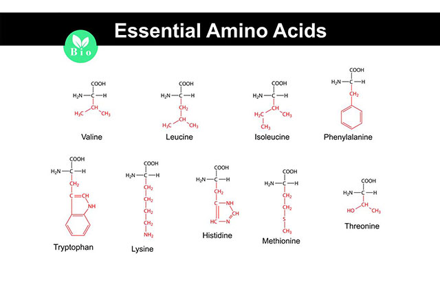 Nine Essential Amino Acids and Their Structures.