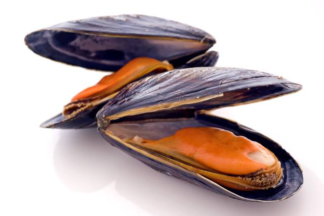 Several Mussels With Open Shells.