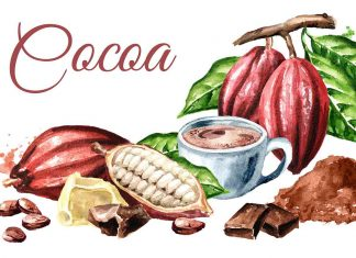 An Illustration Showing Various Cocoa Products.