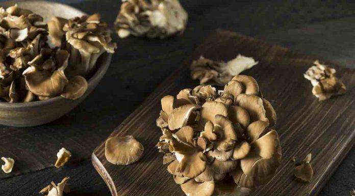 Maitake Mushrooms On a Wooden Board.