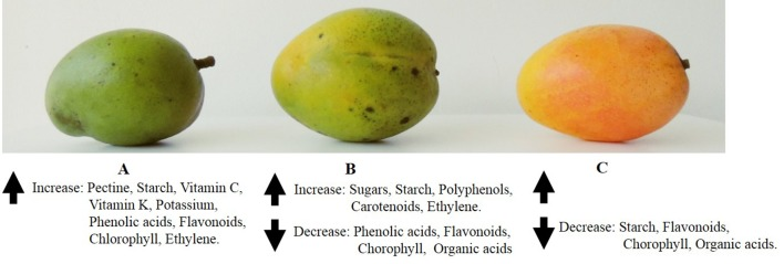 The Nutritional Changes In Mango as the Fruit Ripens.