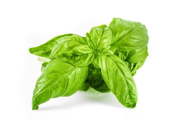Sweet Basil Leaves.