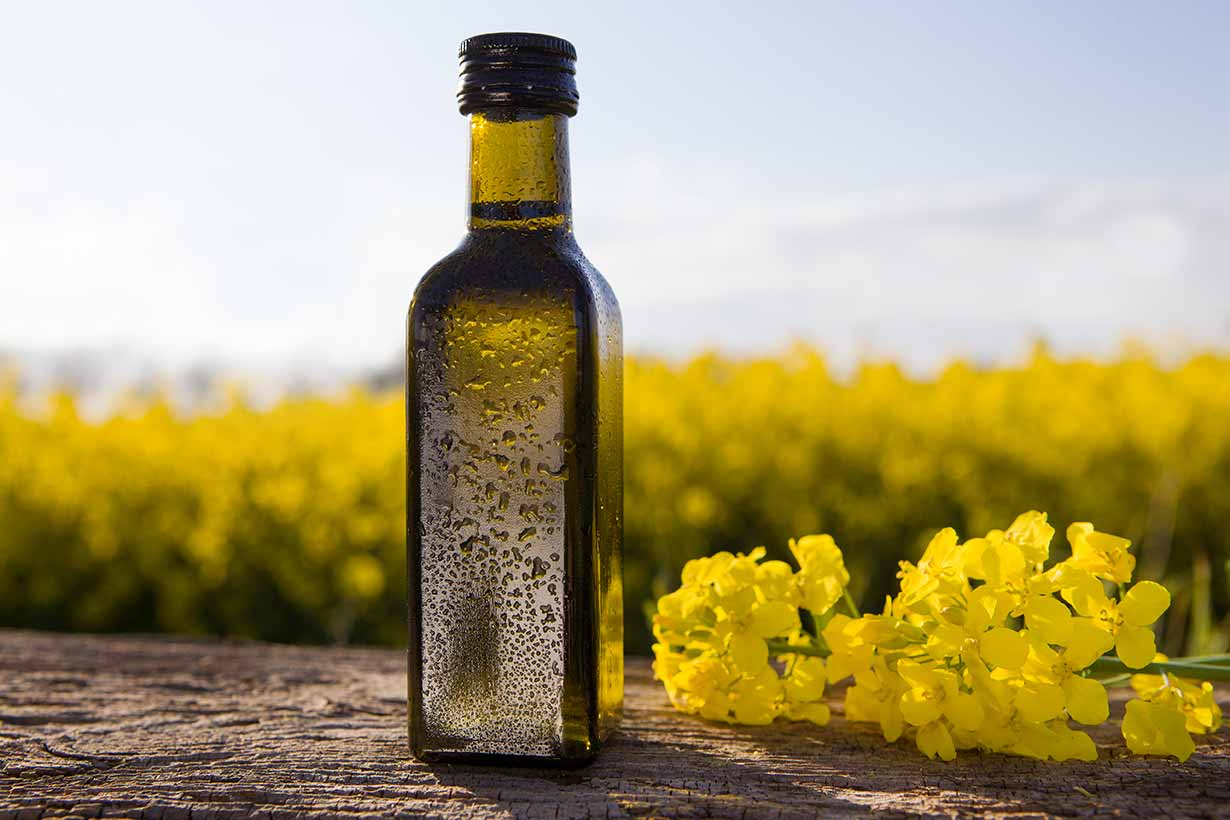 A Bottle of Canola Oil Next To Rapeseed Field.