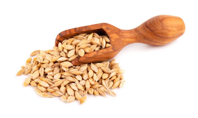 A Wooden Scoop and a Pile of Barley Grains.