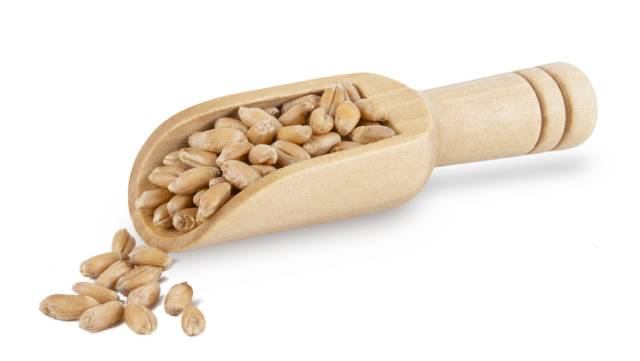Close-up View of Spelt Grains In a Wooden Scoop.