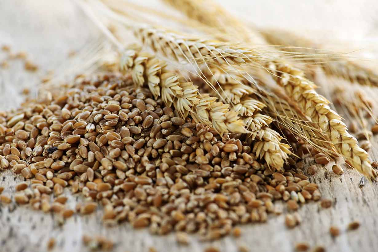 Whole Grain Wheat Kernels and Grains.