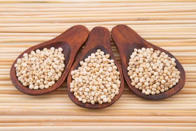 Sorghum Grains On Wooden Spoons.