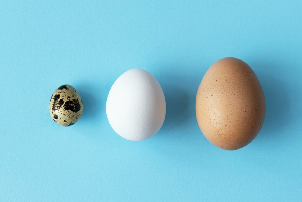 Three types of eggs on a blue background.