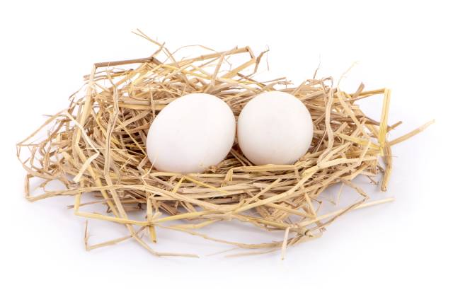 Two white duck eggs on a bed of straw.